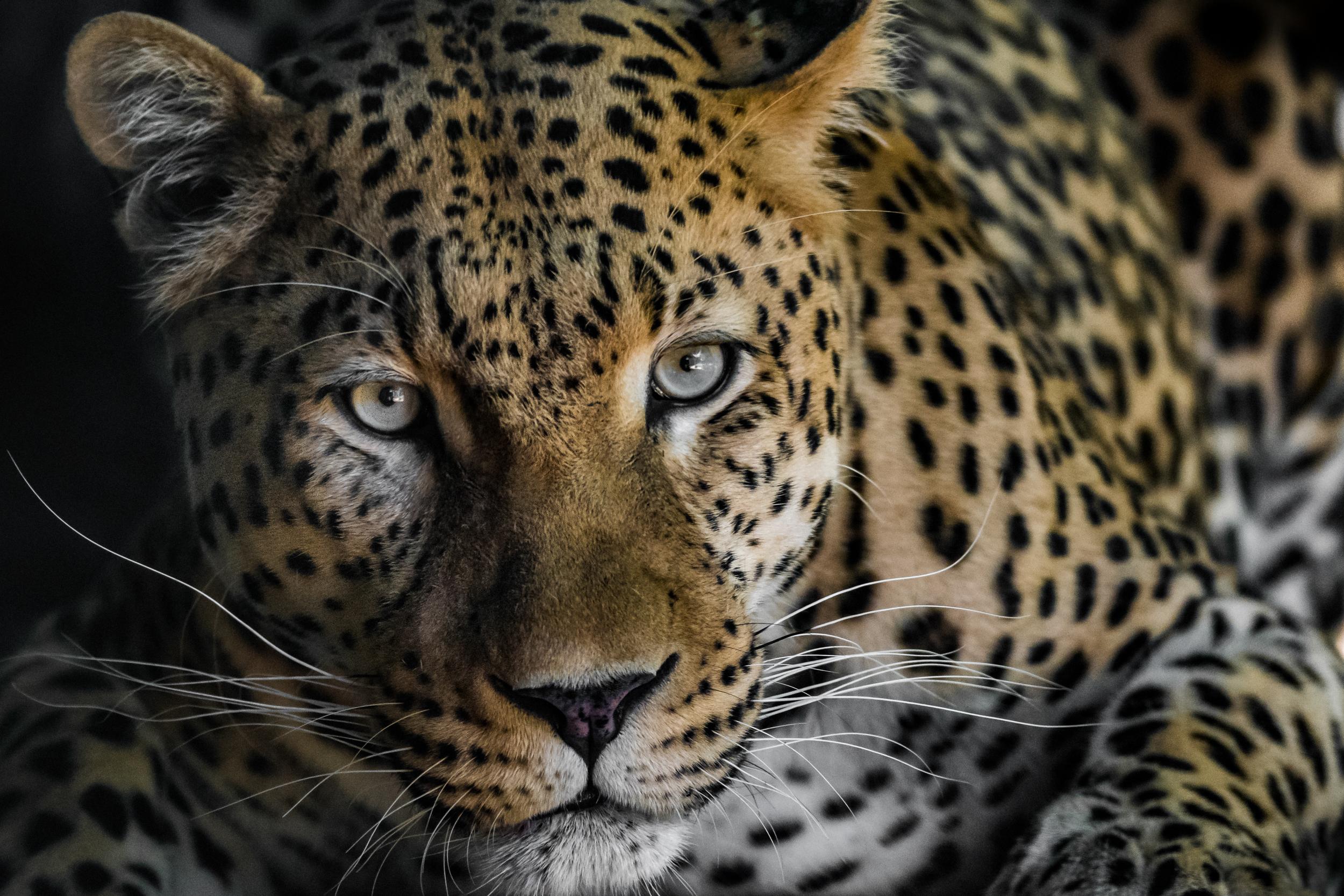 Wildlife-2-5.jpg