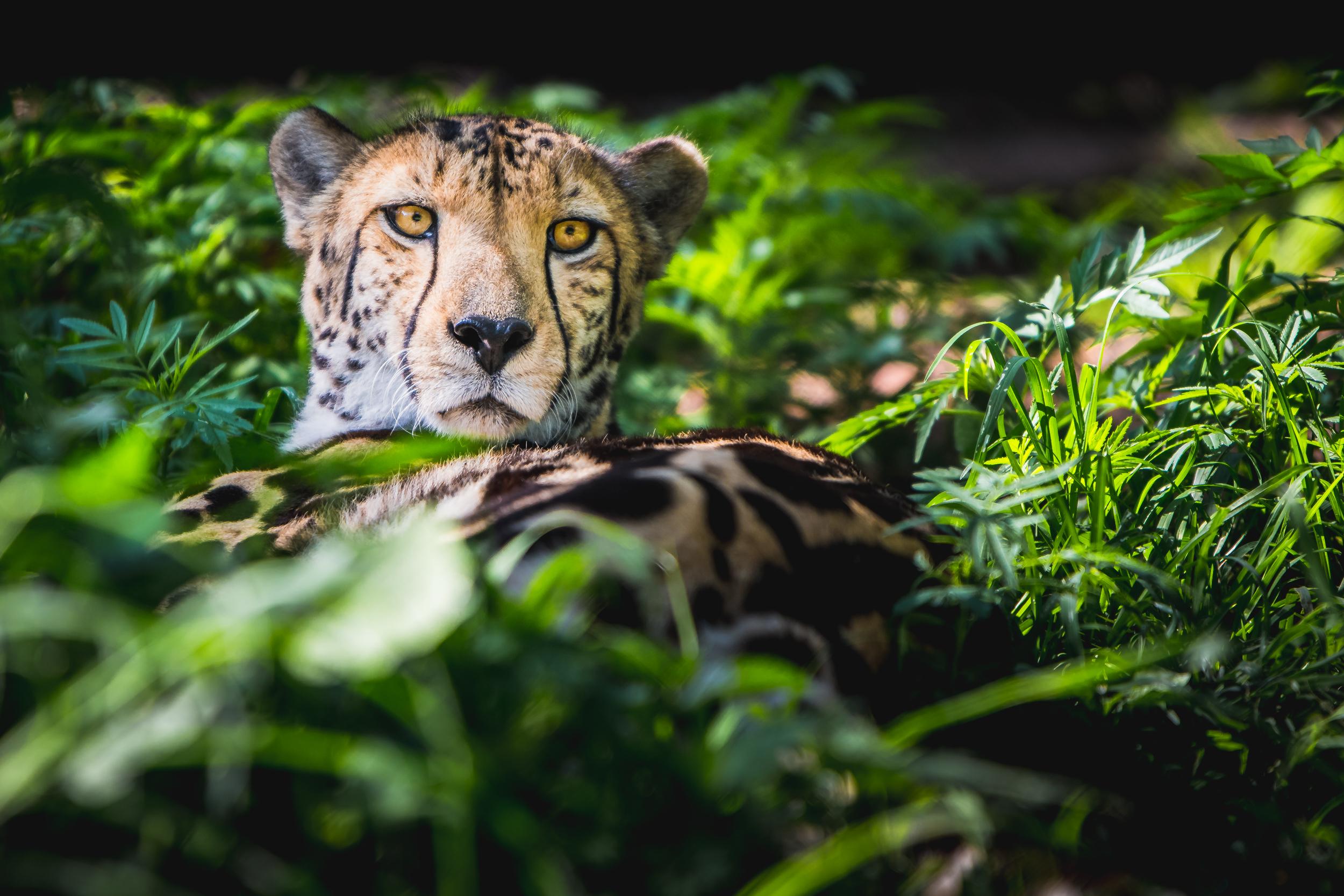 Wildlife-1-6.jpg