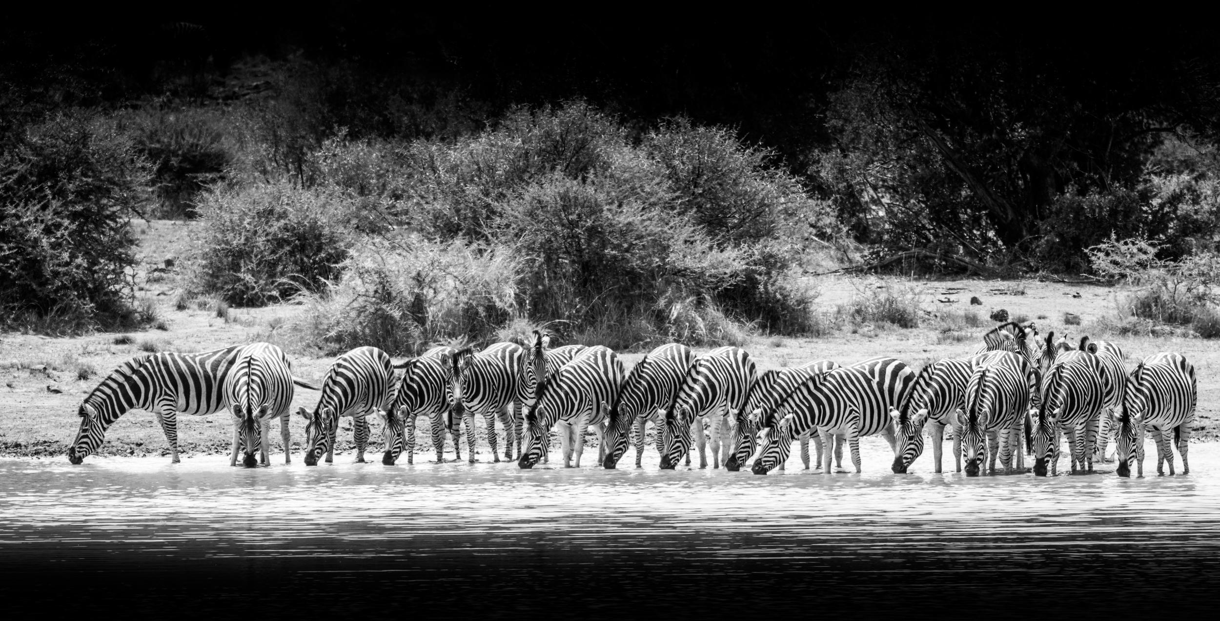 Wildlife-2.jpg