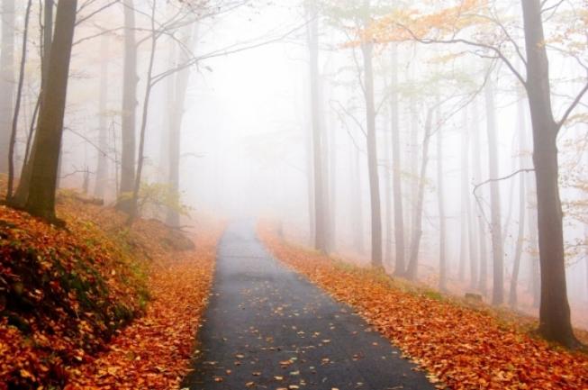 cual_ave_fenix_otoño.jpg