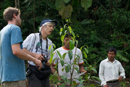 El autor (izquierda), Campbell Plowden de CECAMA, y productores de palo de rosa de Ampiyacu, Loreto, Perú, observan un árbol joven en el año 2014. Foto gracias a Andrew Schwarz
