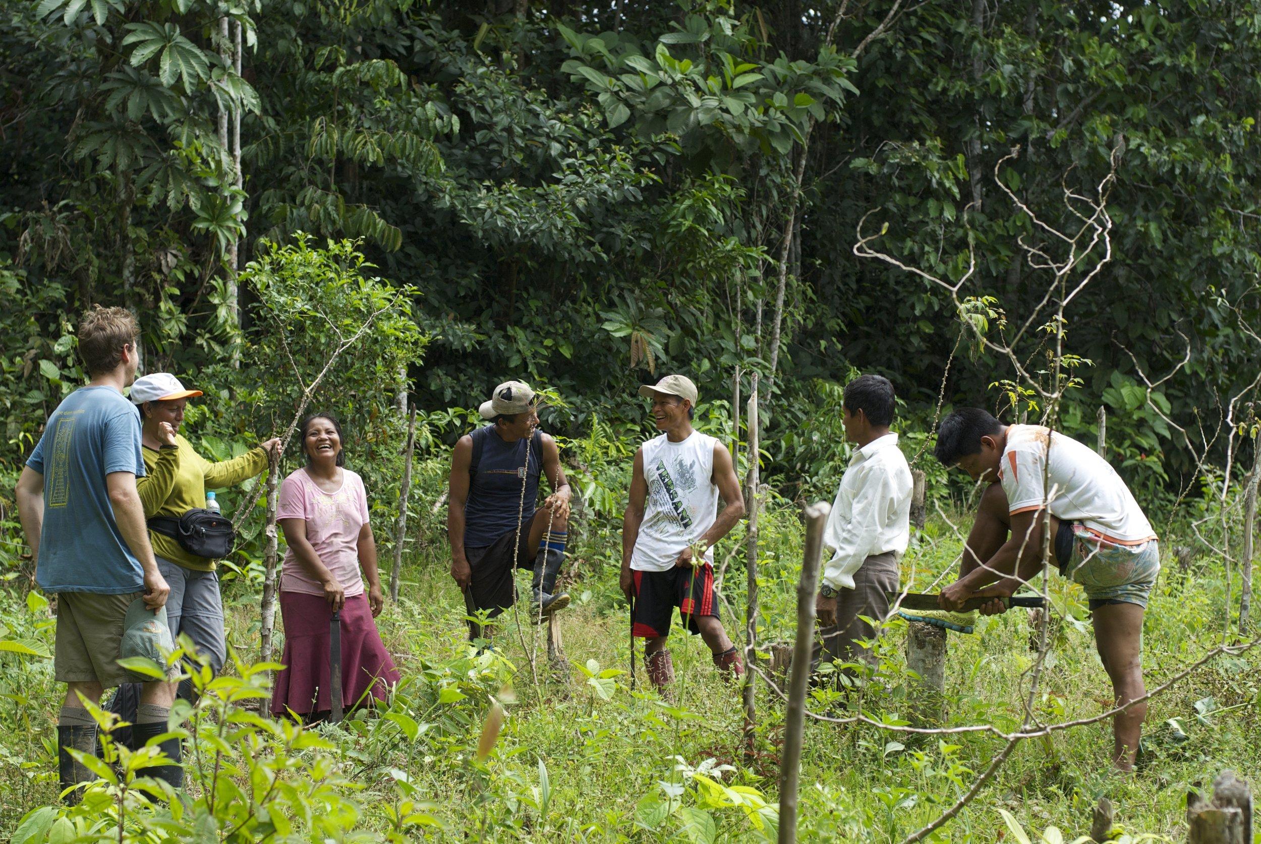 Innovadores Agroforestales