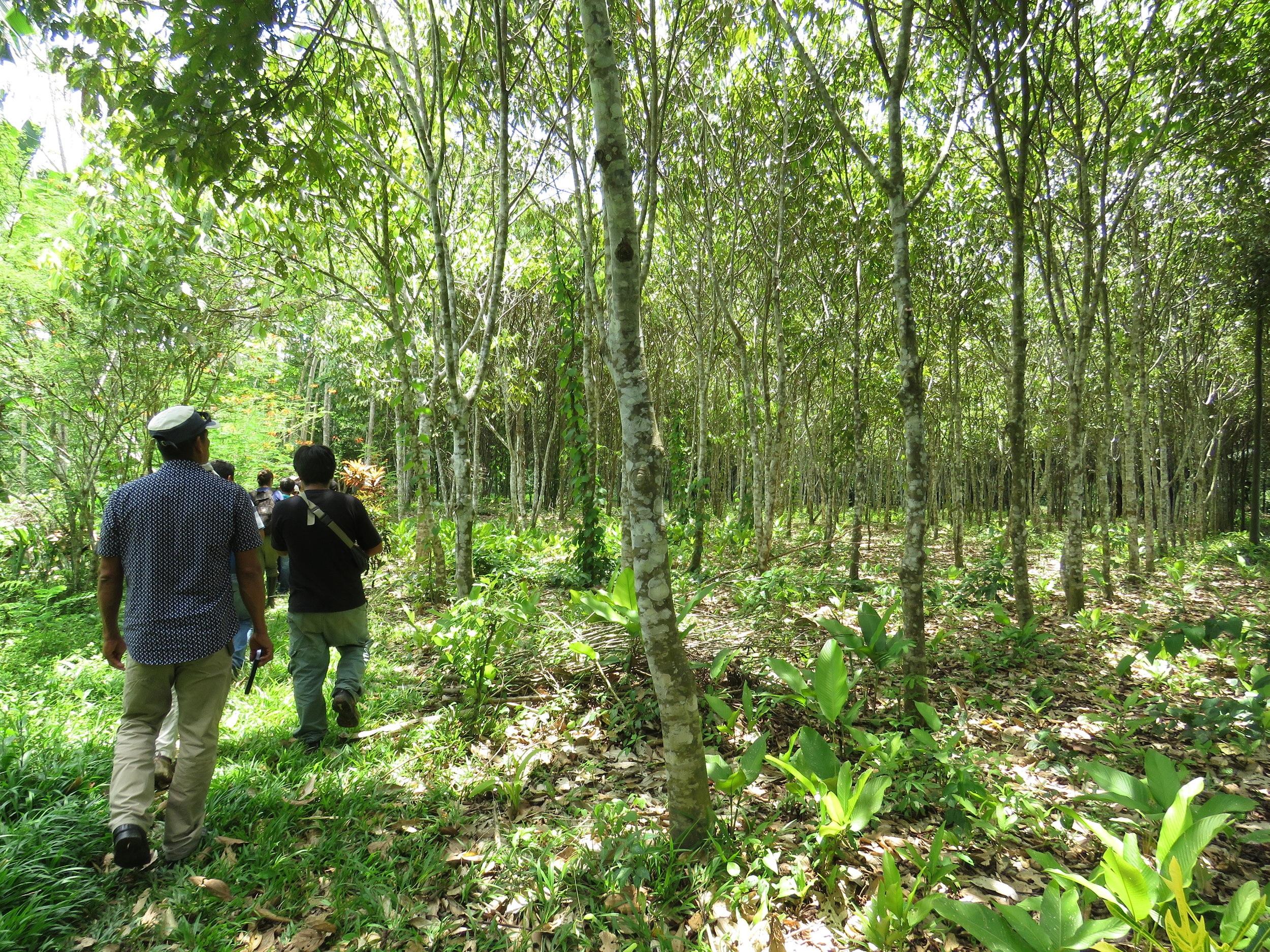 Regeneración Amazónica
