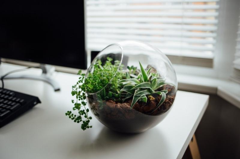 ecologie-plante-bureau.jpg