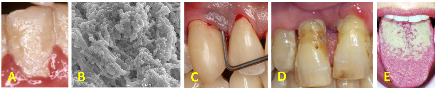 DentalShots.png