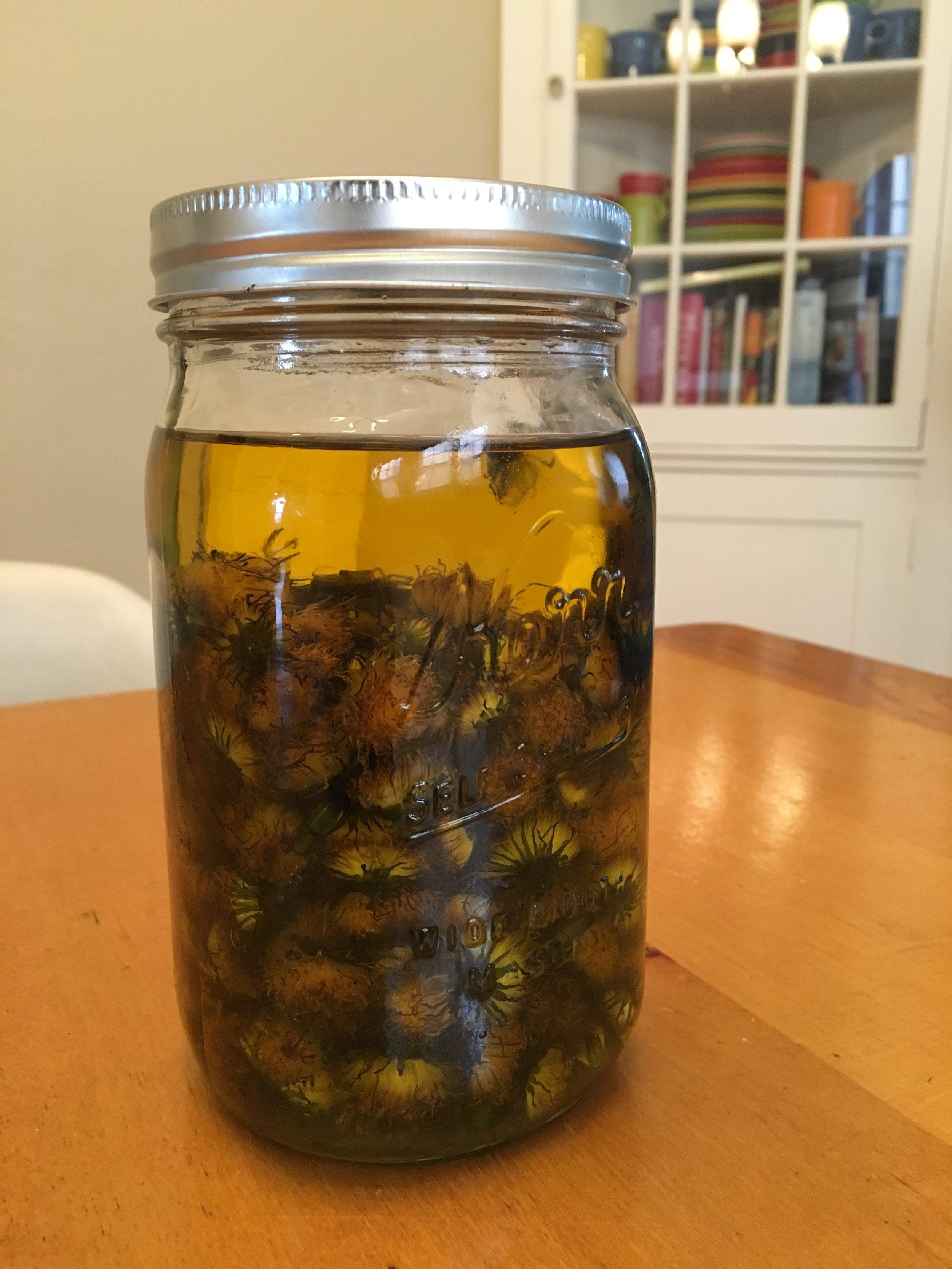 infusing dandelions.JPG