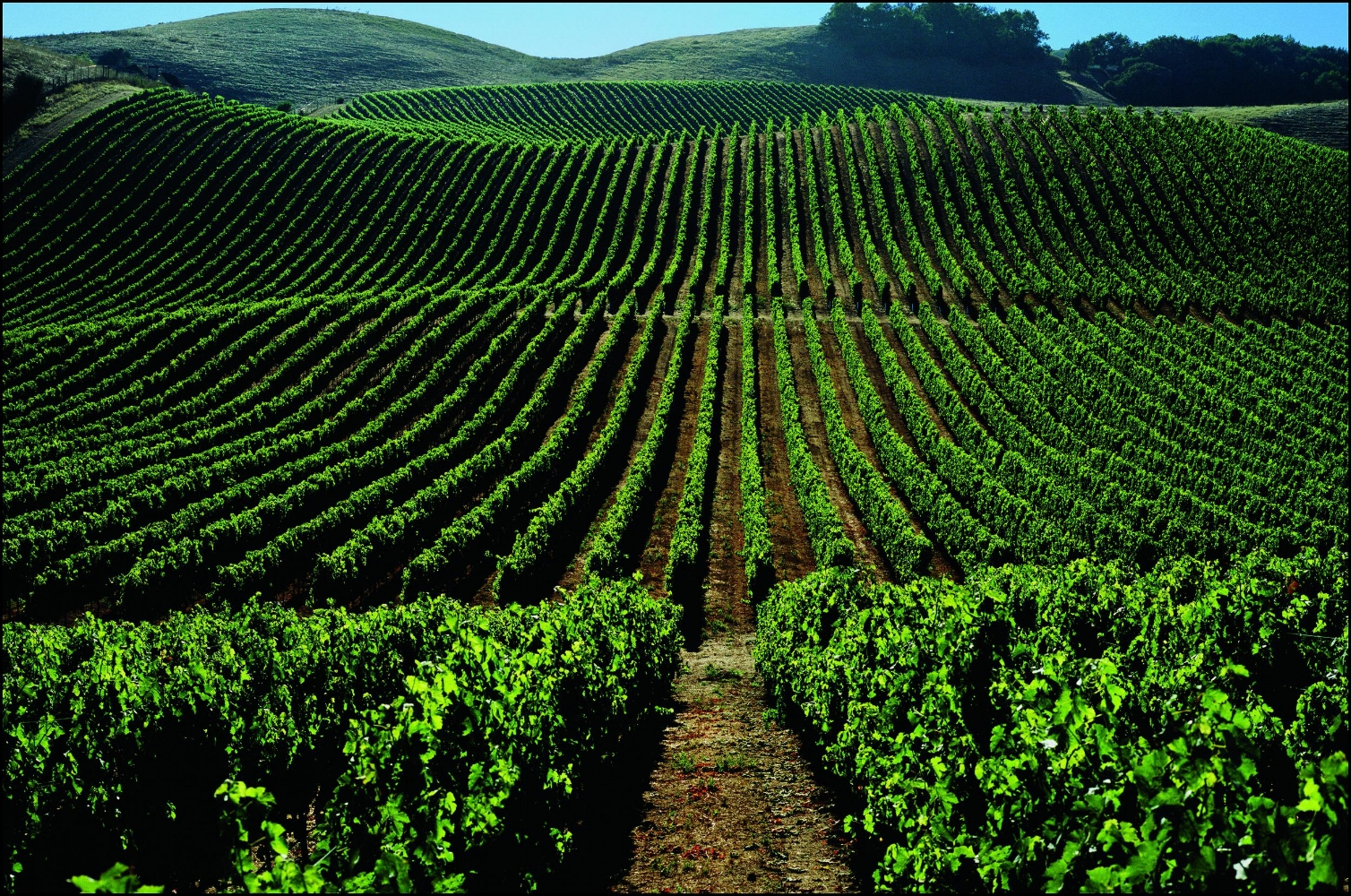 WORLD WINE TRADE GROUP INDUSTRY SECTION -