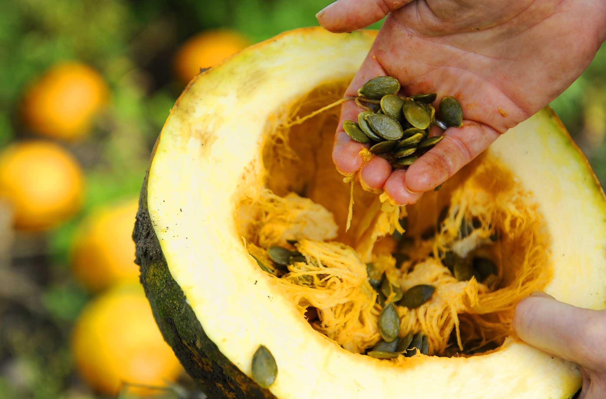 Styrian Hulless Pumpkin Seeds