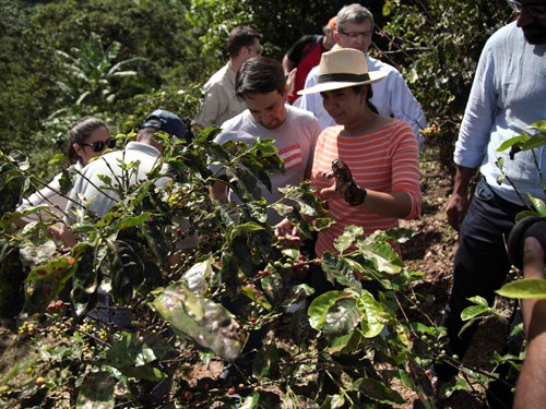 """Rebuilding Puerto Rico's Coffee Industry - """"Although the aftermath of the hurricanes has been devastating for the Puerto Rican coffee industry, it has also provided a unique and time-sensitive opportunity to rebuild it from the ground up in a way that is stronger and better than before""""In Partnership With"""