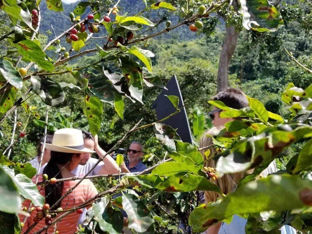 Linmanuel and farmer in foreground Coffee trees.jpg