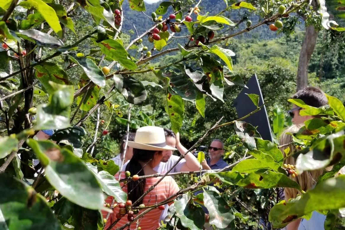 Coffee Sector Revitalization -