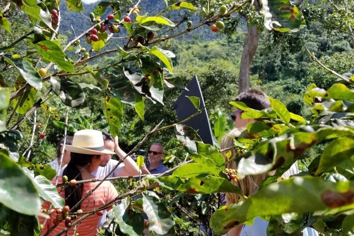 COFFEE SECTOR REVITALIZATION -