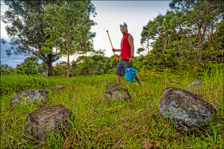 Early Morning:  John at Ahu Lani's rock circle carrying a bucket of koa seedlings and an o'o bar, used for planting trees. Photo courtesy of PF Bentley