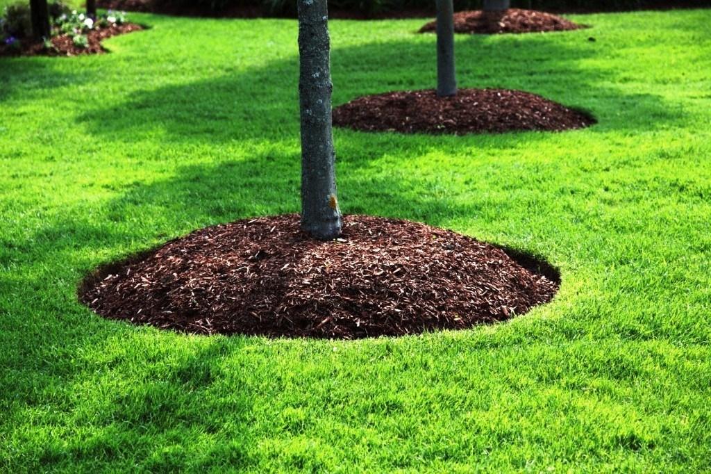 Ians-lawn-mulching.jpg