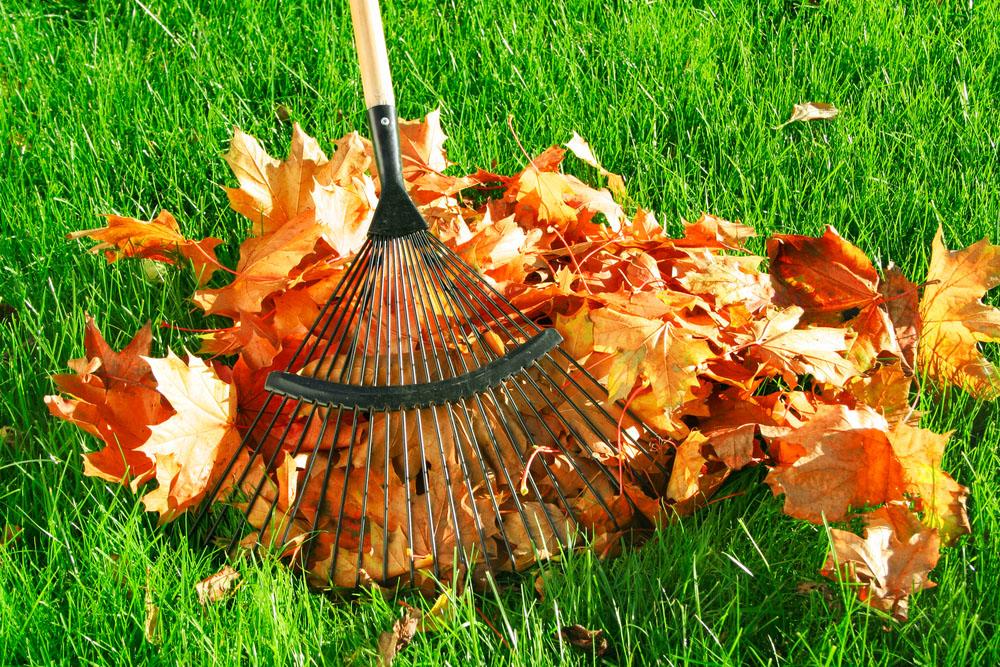 Ians-lawn-leaf-removal.jpg