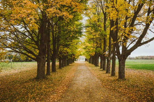 boss-fight-free-stock-images-image-photos-photo-photography-row-trees-fall-autumn-500x333