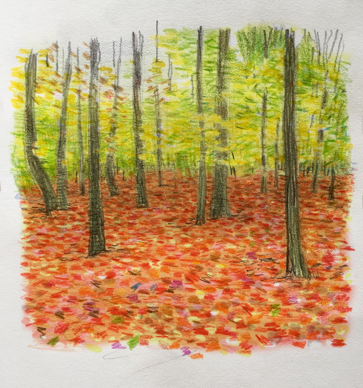 red-carpet-of-leaves.jpg