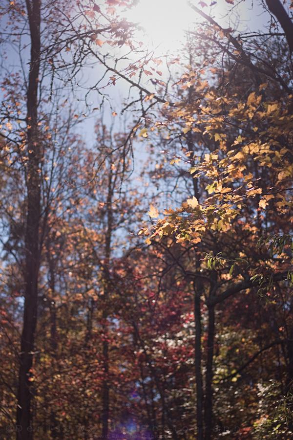 2013-1110-november-img_5603.jpg