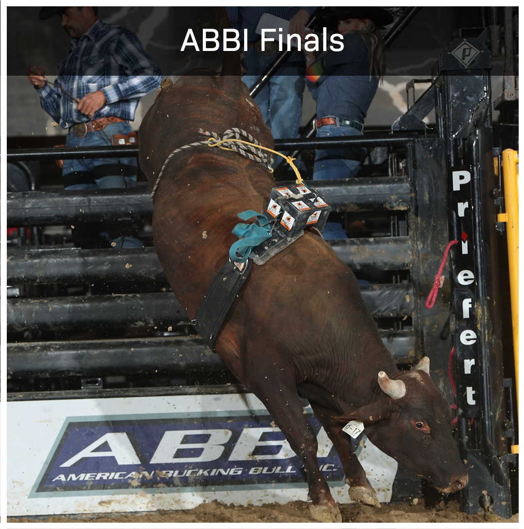 With big money on the line, the best bull breeding programs are on display as young ABBI bulls compete to raise their stock as future PBR bovine contenders.