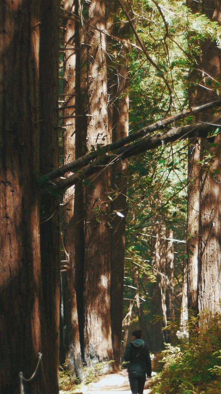 JPEG image-2A56DD9ACD47-5.jpeg
