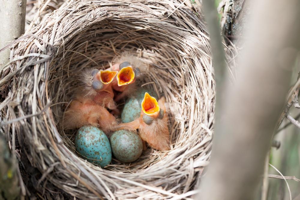 babybirdsthriving.jpg