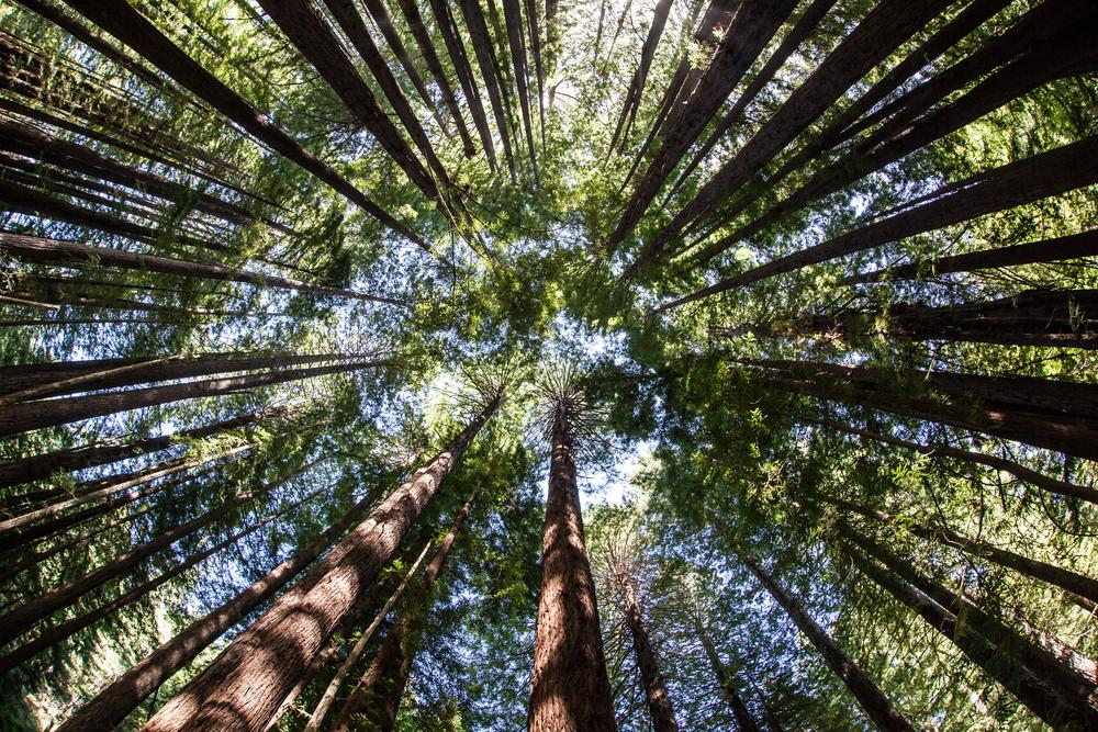 growingthrivingtrees.jpg
