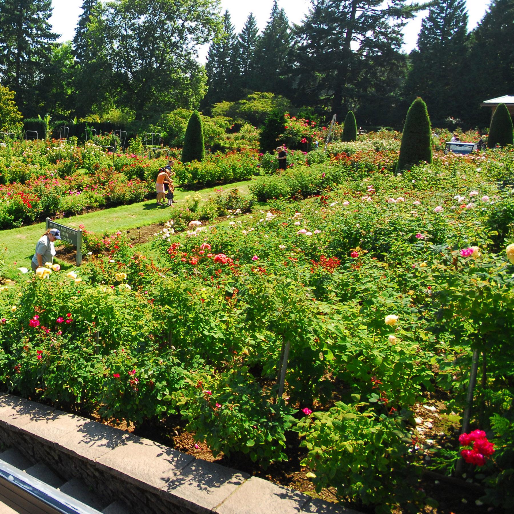 Portland Area -