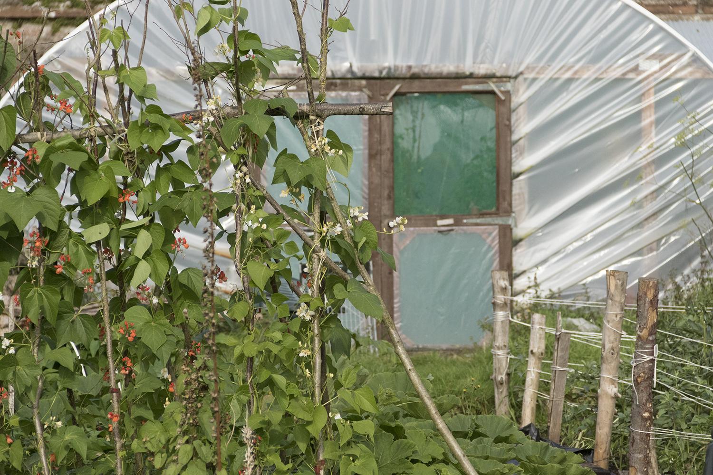 Autumn Gardening & Tidying 2019 - Autumn Maintenance Week