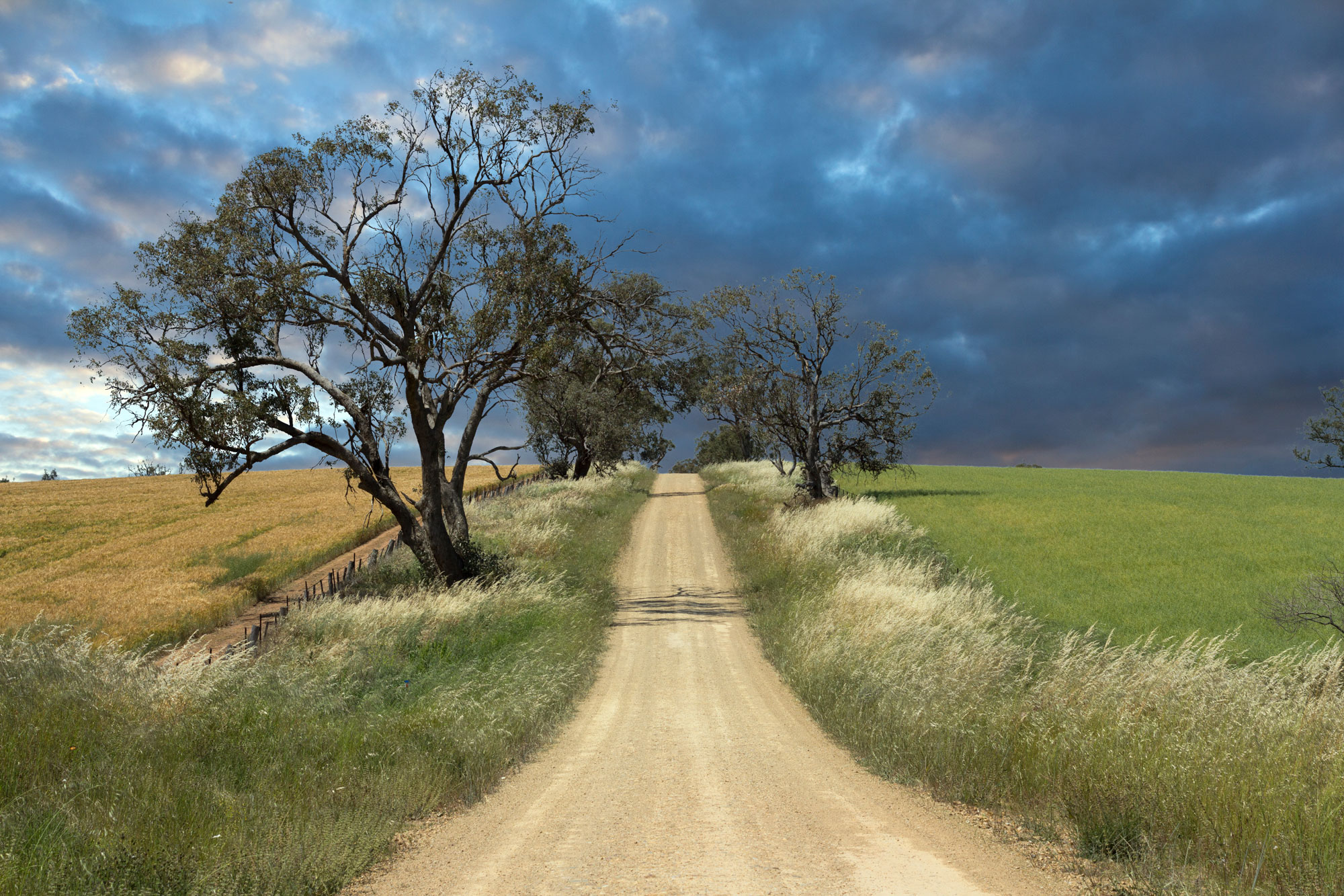 0428---Country-Laneway,-Thomas-Parker.jpg
