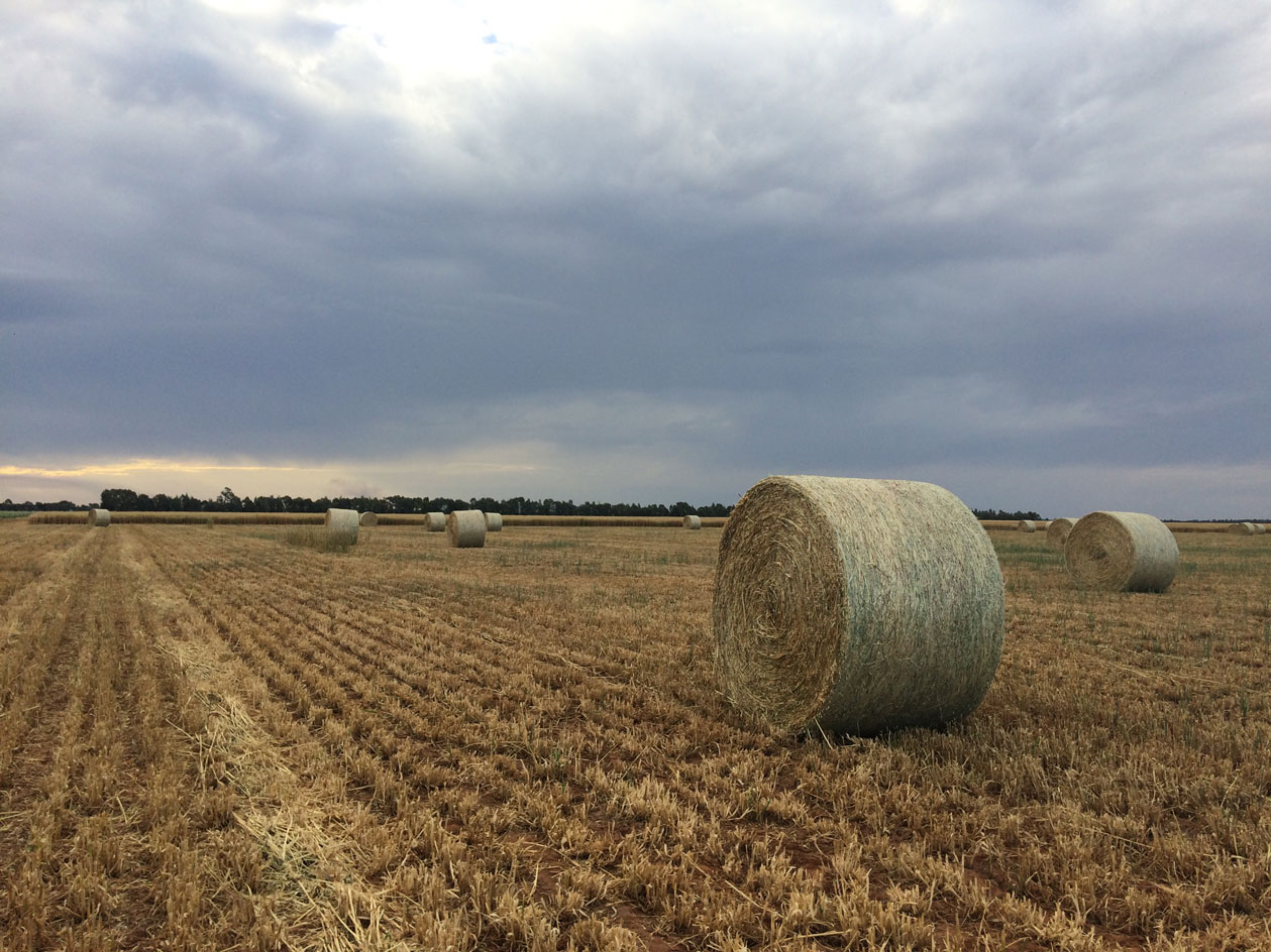 993---Max-Hatty-A-Bales-For-Sale.jpg