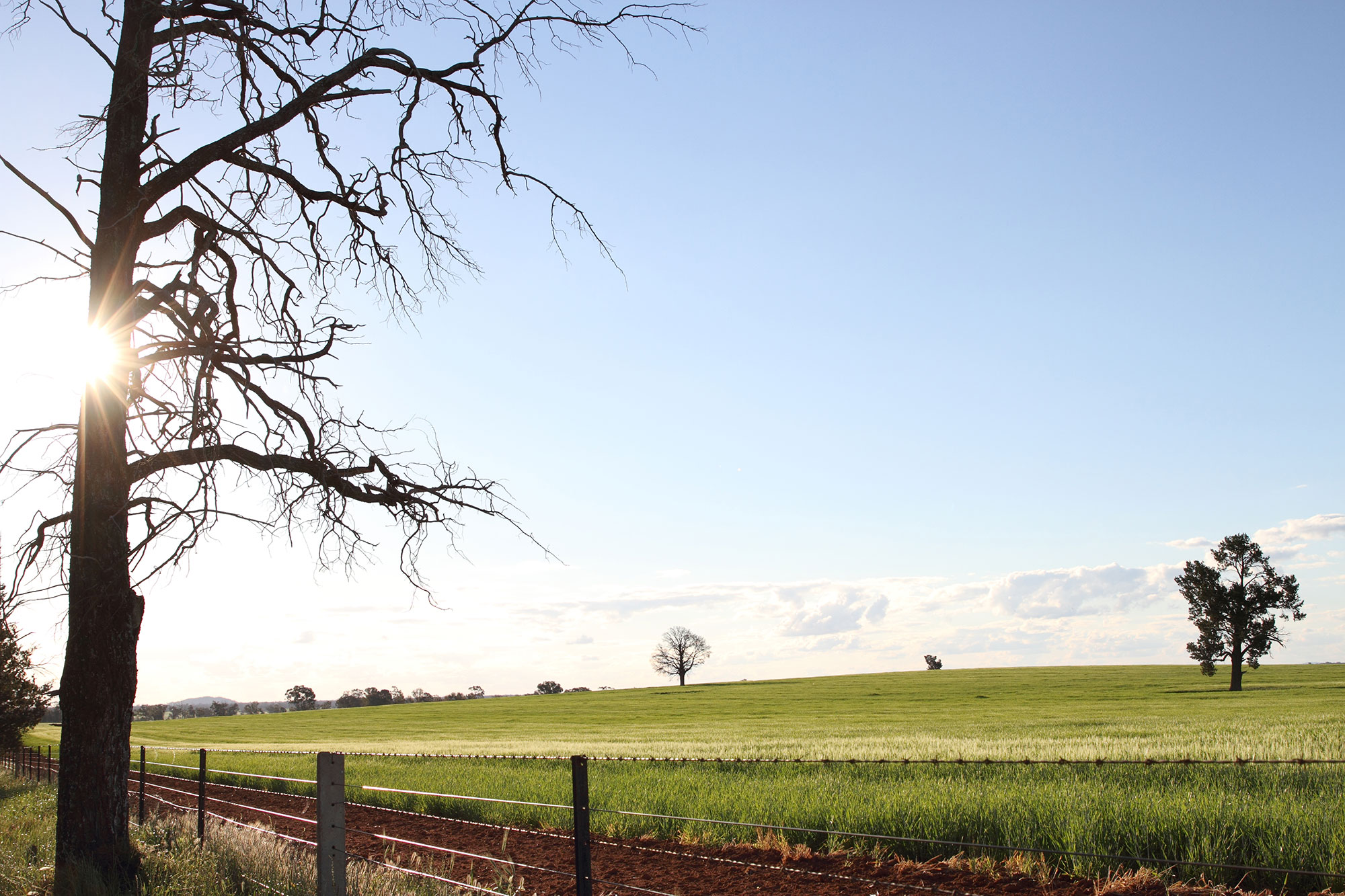 0199---Fields-of-Green,-Stacey-Taylor.jpg