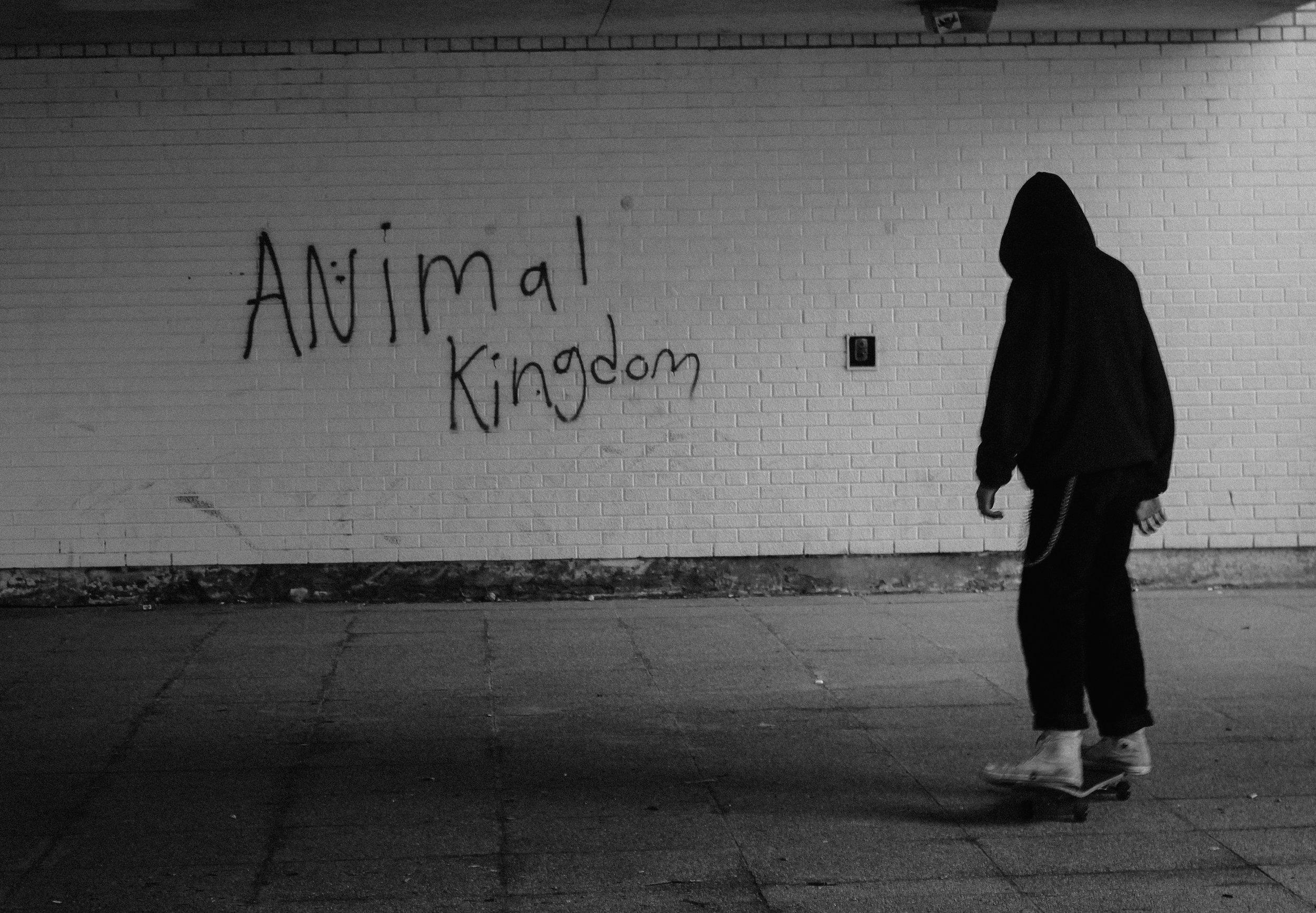 animal kingdom (2).jpg