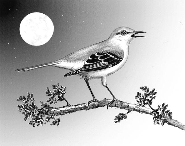 MockingbirdNight.jpg