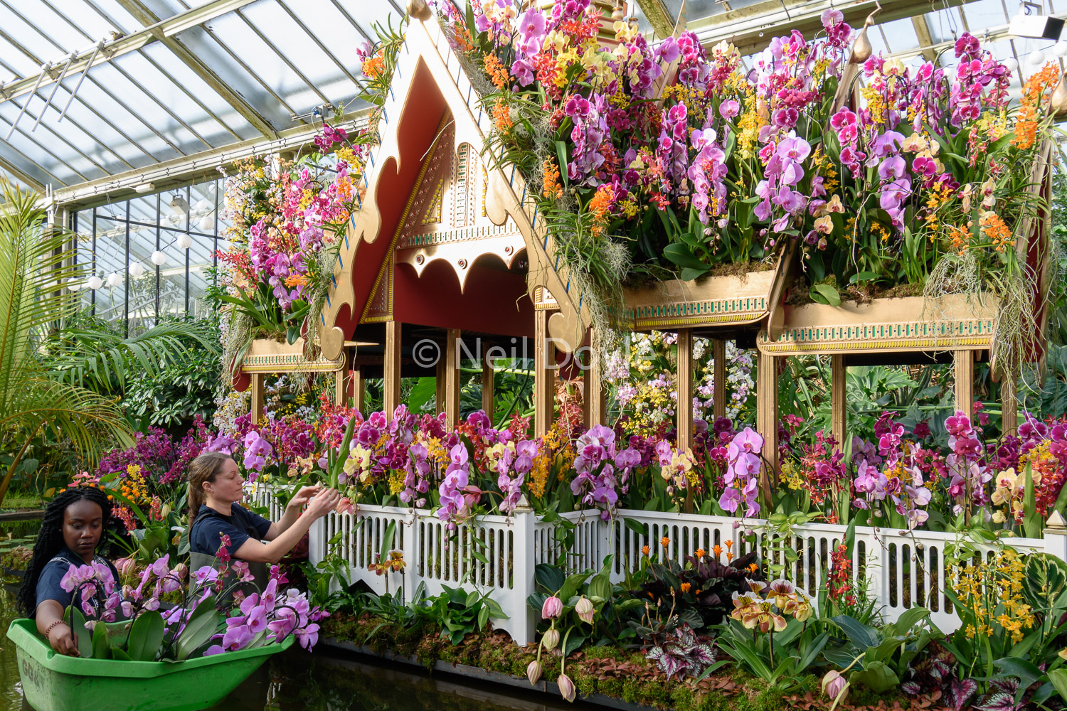 Orchid palace