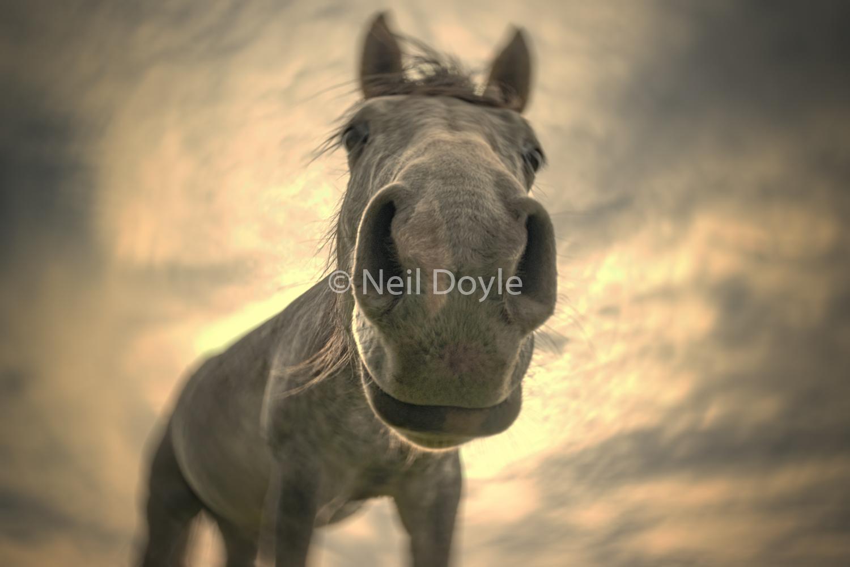 Dream-horse.jpg