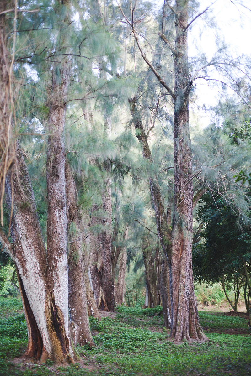 heavenmcarthur-inhabit-land-hawi-153-web.jpg
