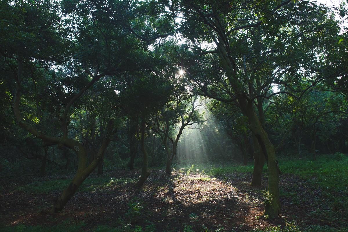 heavenmcarthur-inhabit-land-hawi-110-web.jpg
