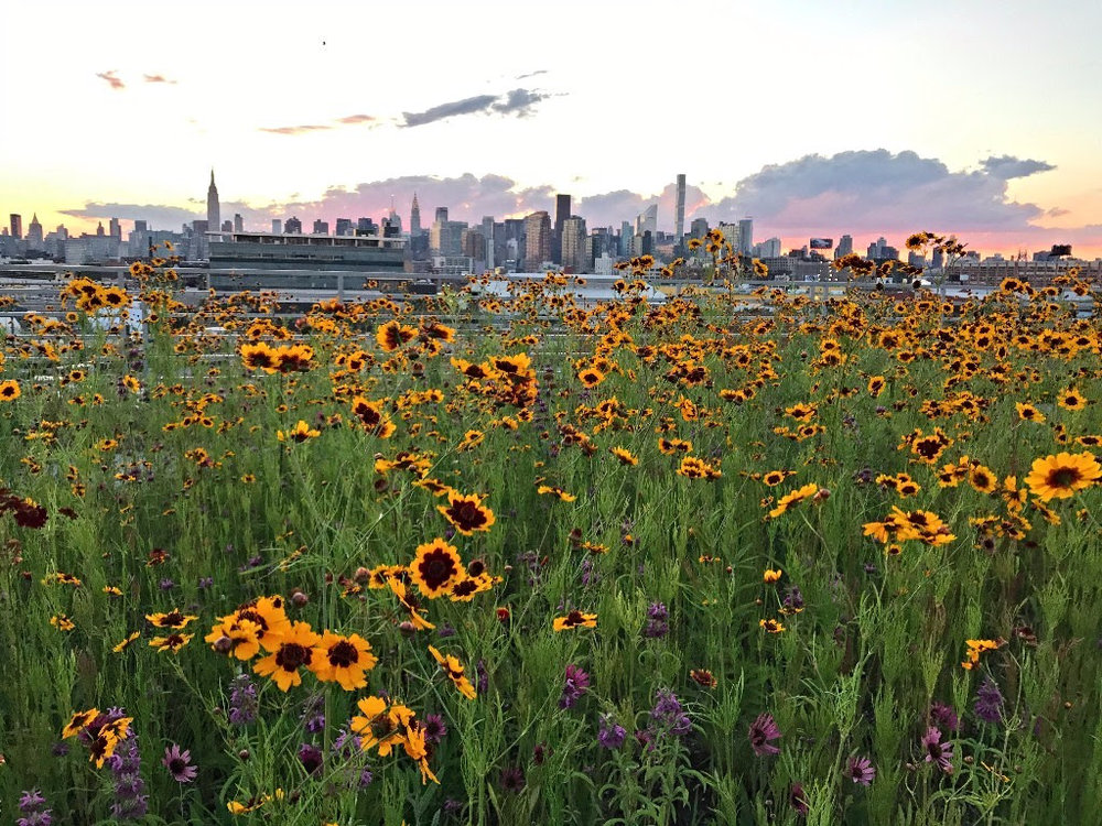 SOLD OUT - FREE ROOFTOP TOUR at Kingsland Wildflowers