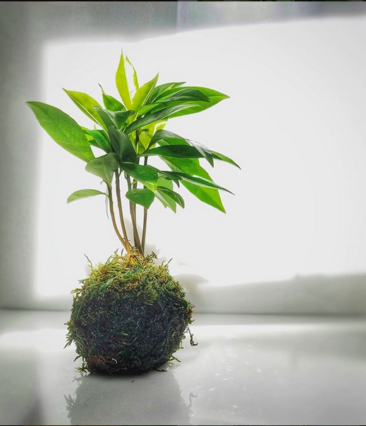 SOLD OUT - Kokedama How-To: Floating Bonsai Gardens with EunYoung Sebazco