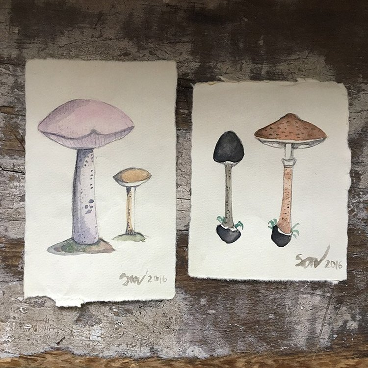 Children's Botanical & Mushroom Studies in Watercolor