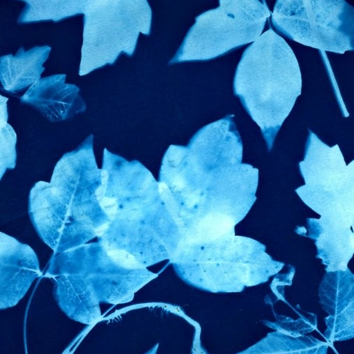 The Artful Science of Cyanotypes