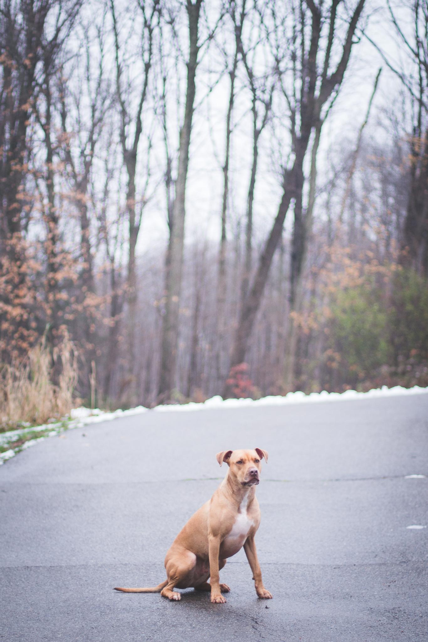 Dog aggression training. Madison WI dog training