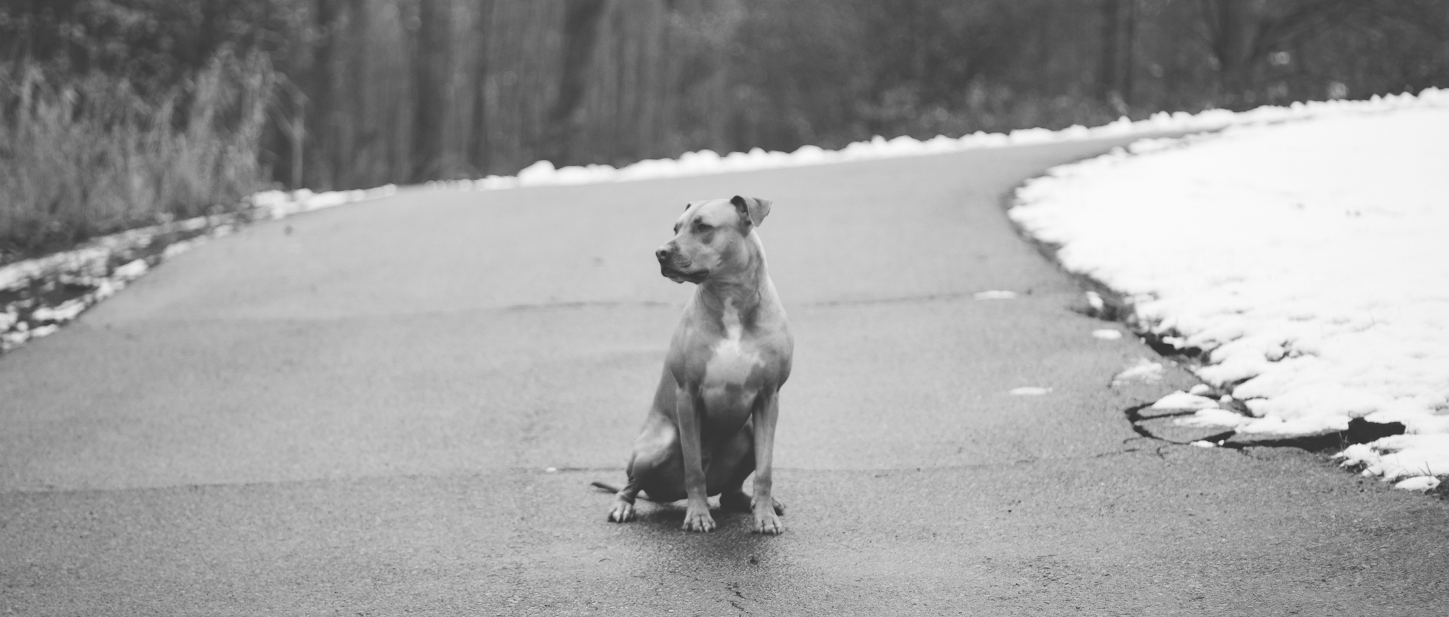Black and white dog on street. Madison WI dog training