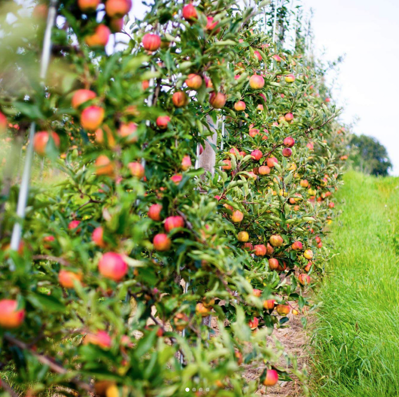 champlain orchard -