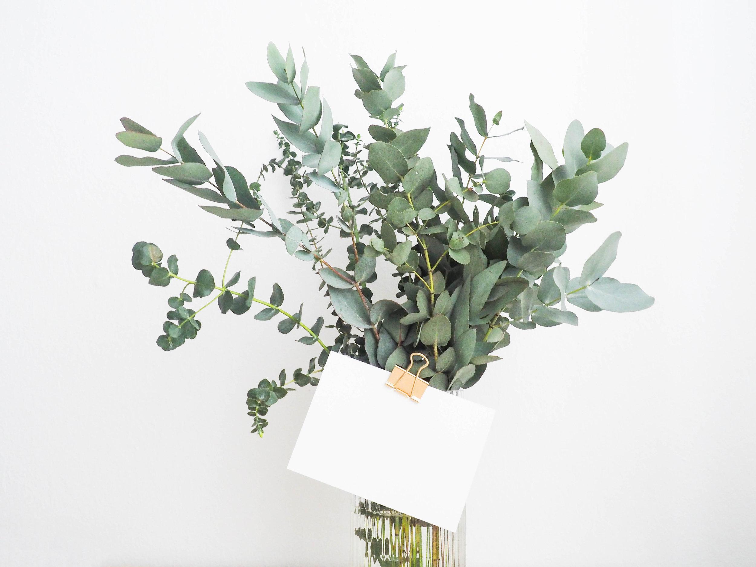 plant gift.jpg
