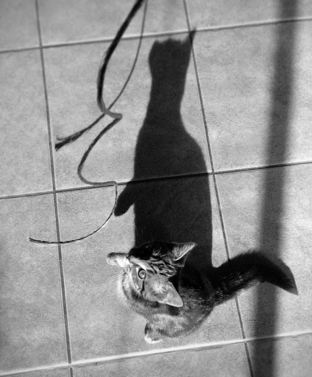 kitten_cat_albury_photographer_benhasacat_animal_pet_14353924749_o.jpg