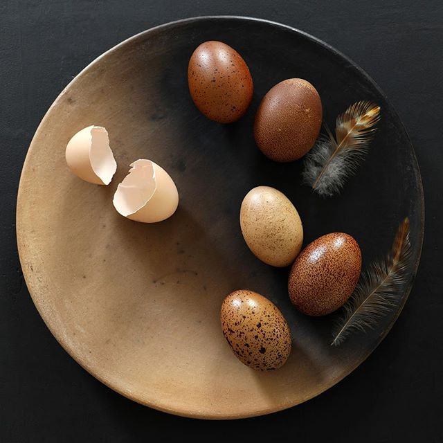Loving @selliottphoto 's take on our speckled marans eggs. Thanks for the perfect Easter post! #skills #lighting #stilllife #eggs #ombreggs #andthatceramicscollection