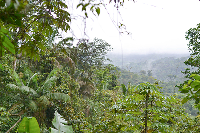 Costa Rica rainforest © Anne van Midden