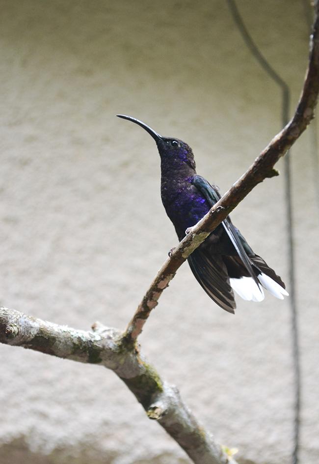 Monte Verde, Costa Rica © Anne van Midden