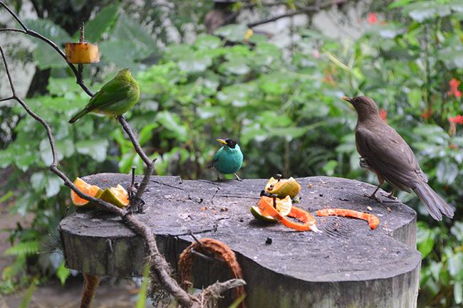 Heliconia Island, Costa Rica © Anne van Midden